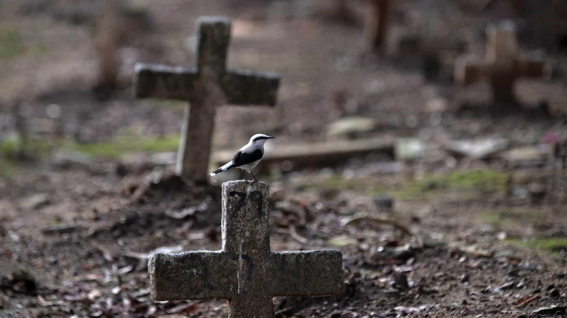 Número de mortes por covid-19 no Brasil chega a 449.068