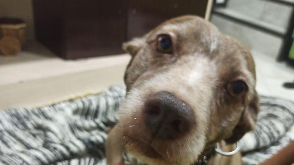 Policial militar de folga mata cachorro a tiros em Belo Horizonte
